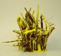 Wurzel, gelb bestäubt - 2012  - ca. 35 cm hoch   Wurzel, Pigment